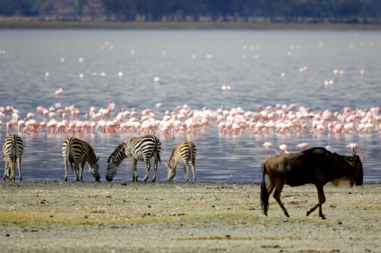 tansania-manyara-flamingos