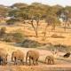Tansania Luxus Flugsafari