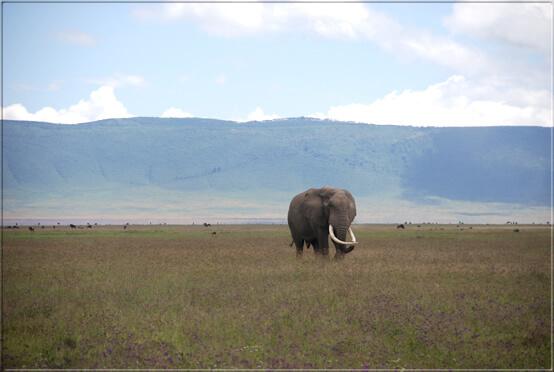 tansania-ngorongoro-elephant